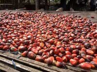 Eight principles for the responsible production of palm oil