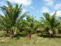 Oil palm stakeholders meet to discuss certification at Honduras workshop