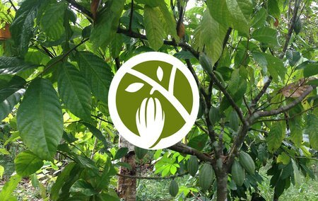 Working with cocoa and chocolate companies through the World Cocoa Foundation