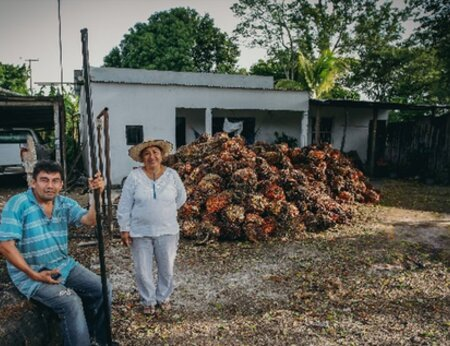 Working together for sustainable palm oil in Mexico