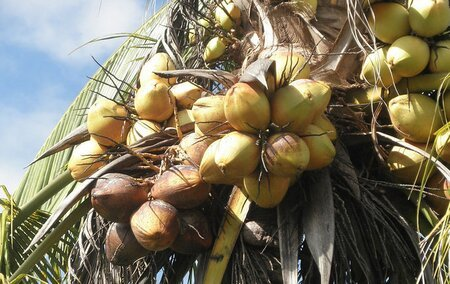 AAK Multi Oils - Responsible Sourcing of Coconut and Soy Oils