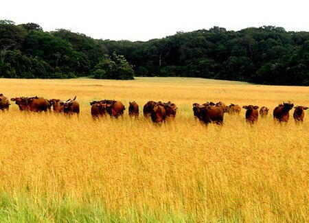 Deforestation Free Beef Procurement