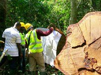 Call for applications: timber legality verification observers