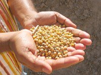 Proforest joins annual conference on responsible soy