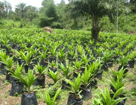 The Africa Palm Oil Initiative's Ghana national platform develop first newsletter