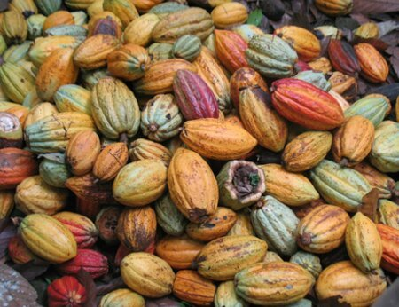 Reducing Deforestation in Cocoa Production Landscapes