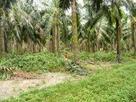 Sustainable Oil Palm week in Brazil