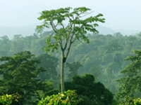 What action on zero deforestation pledges?