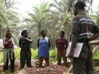 Launching the second Africa Sustainable Palm Oil Conference