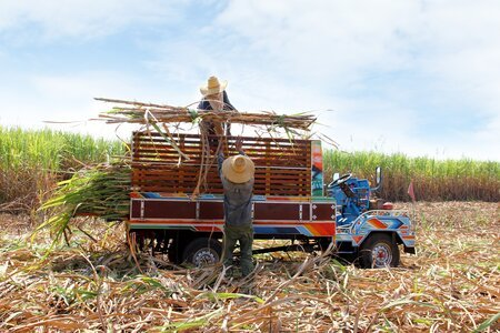 Promoting sustainable sugarcane production in Negros Occidental