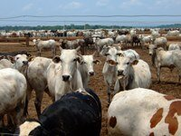 Building understanding in the cattle sector in Brazil